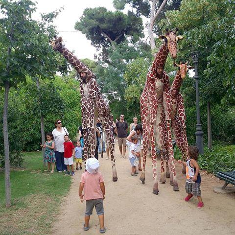 girafes teatre
