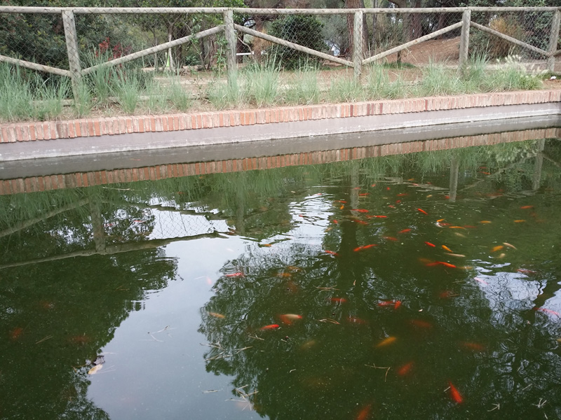 estanque-parque-oreneta